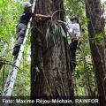 Pocas especies de árboles amazónicos almacenan grandes cantidades de CO2