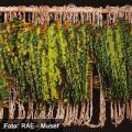 La RAE de arte plumario se abre a las ciencias del medio ambiente