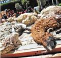 Tres equipos ediles rastrean a perros salvajes en El Alto