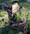 Teleférico no contaba con permiso para talar árboles