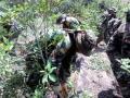 Cocaleros en emergencia por erradicación ilegal