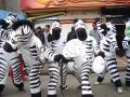 Cebras volverán a las calles alteñas
