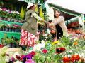 Floristas inauguran Feria Eco Ambiental