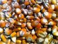 La demanda puso incandescente al mercado de maíz